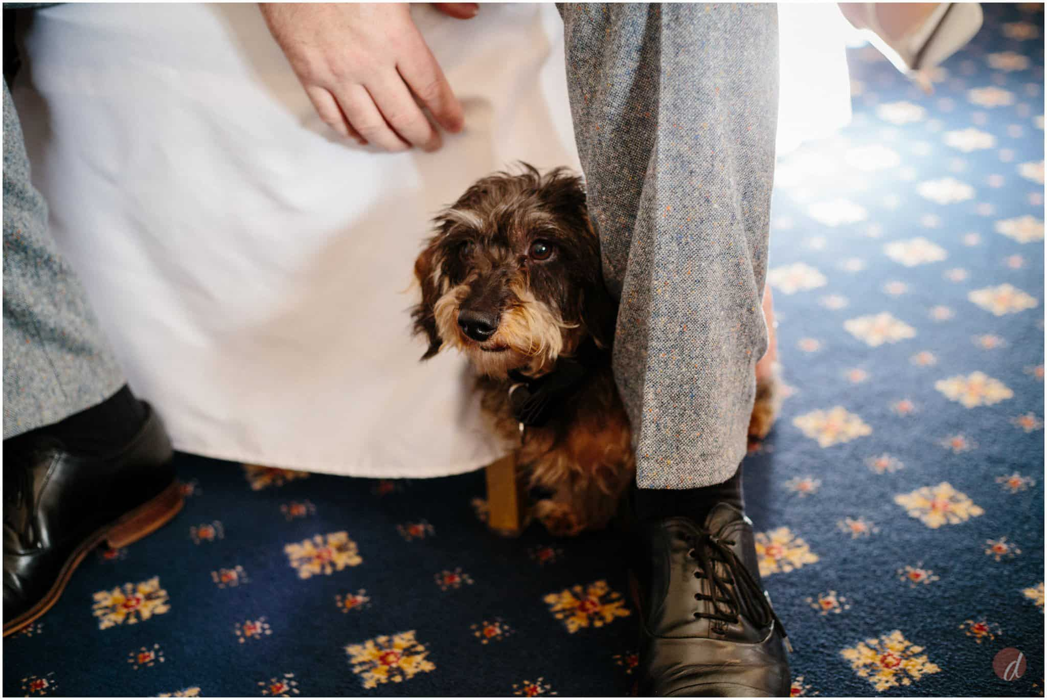 dog wedding guest of honour