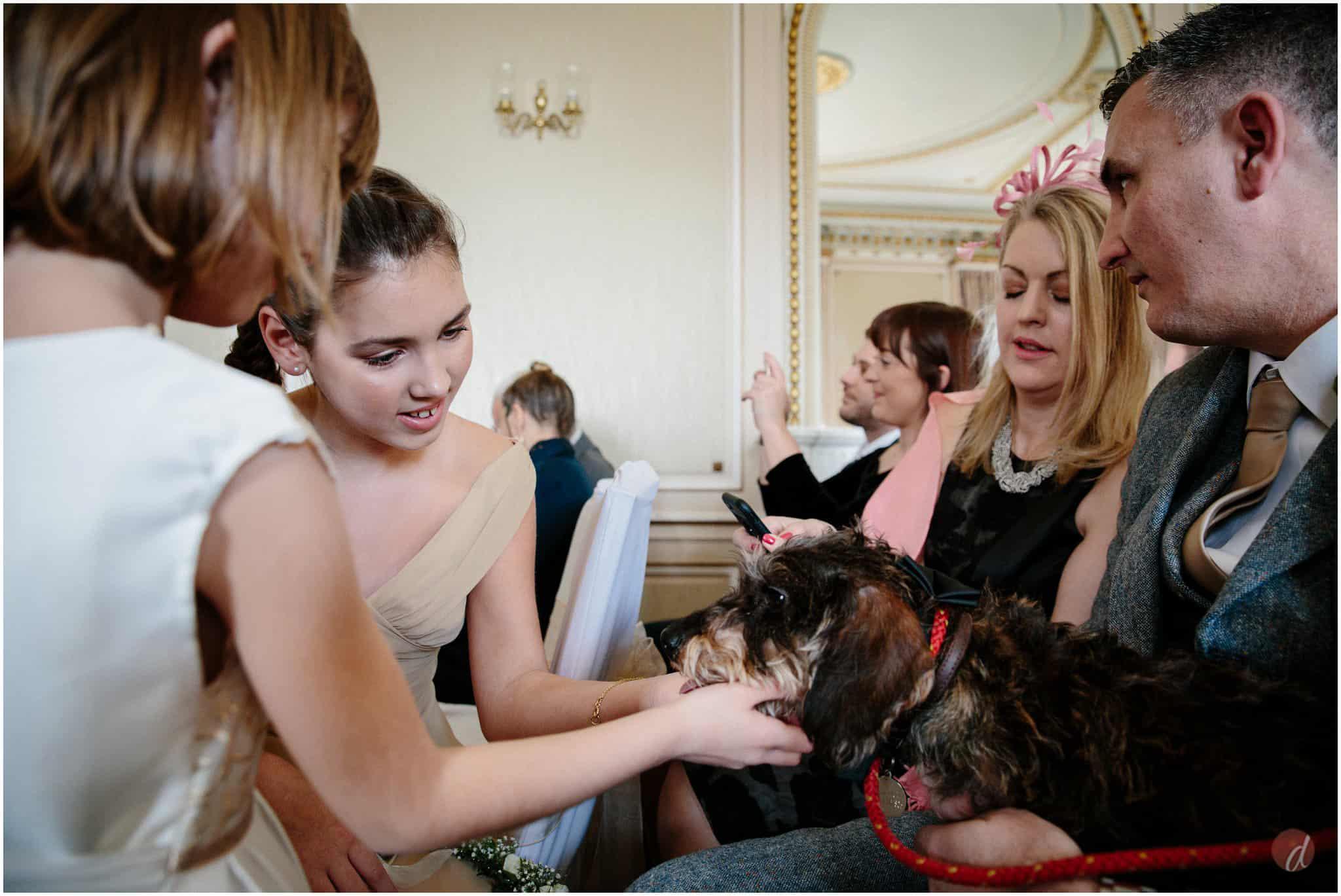 dog wedding guest